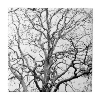 Ramas de árbol teja