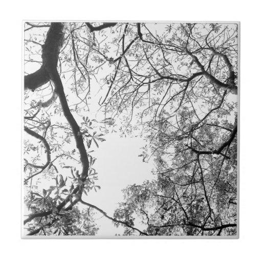 Ramas de árbol azulejo cuadrado pequeño