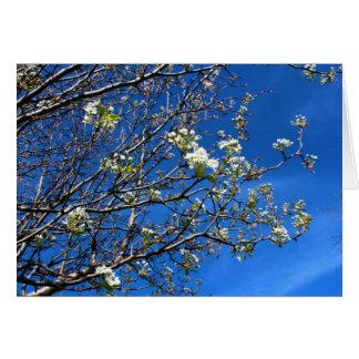Ramas de árbol brillantes de florecimiento contra  felicitación