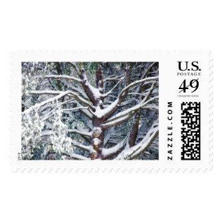 Ramas de árbol cubiertas por la nieve en invierno envio