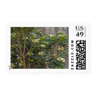 Ramas de árbol de florecimiento sello