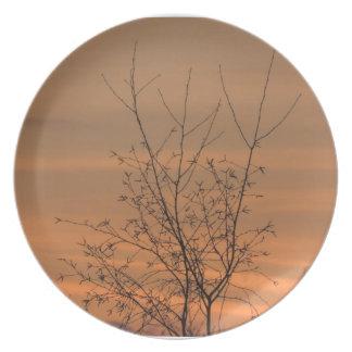 Ramas de árbol de la pizca de la puesta del sol, platos