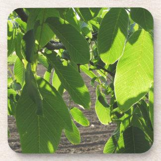 Ramas de árbol de nuez con las hojas verdes posavasos de bebida