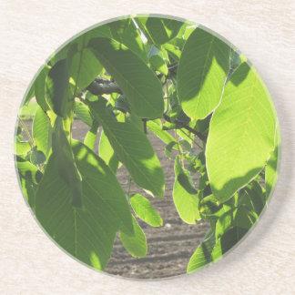 Ramas de árbol de nuez con las hojas verdes posavasos manualidades