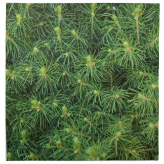 Ramas de árbol de pino servilletas