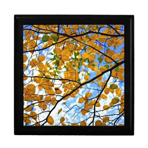 Ramas de árbol del otoño cajas de regalo