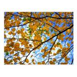 Ramas de árbol del otoño postal