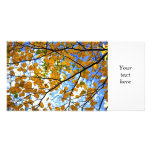 Ramas de árbol del otoño tarjeta fotografica