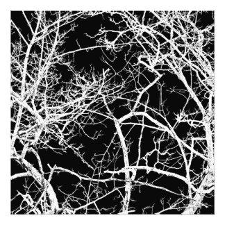 Ramas de árbol en fondo negro impresiones fotograficas