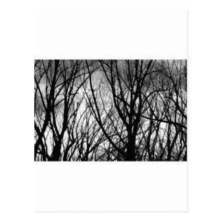 Ramas de árbol en la noche tarjetas postales