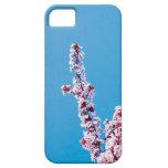 Ramas de árbol florecientes en primavera iPhone 5 Case-Mate funda