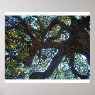 ramas de árbol poster