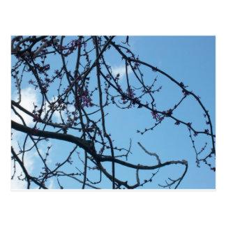 Ramas de árbol postales