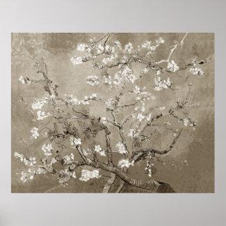 Ramas de la almendra de Van Gogh en la floración - Poster
