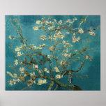 Ramas de la almendra de Van Gogh en la floración Posters