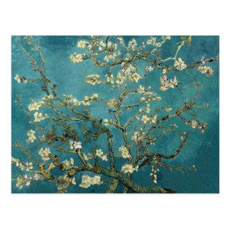 Ramas de la almendra de Van Gogh en la floración Postales