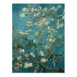 Ramas de la almendra de Van Gogh en la floración Postal