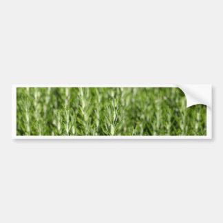 Ramas de Rosemary (officinalis del Rosmarinus) Pegatina Para Auto