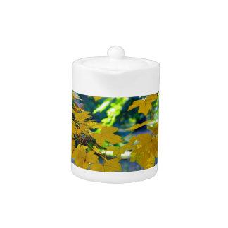 Ramas del arce con las hojas del amarillo en