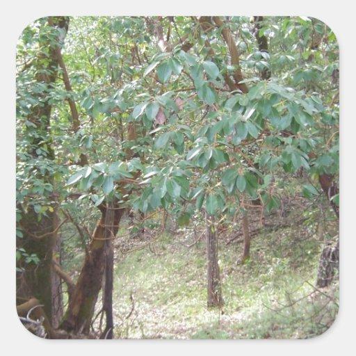 Ramas en el bosque calcomanía cuadradase