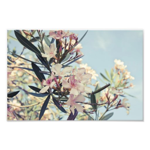 Ramas florales cojinete