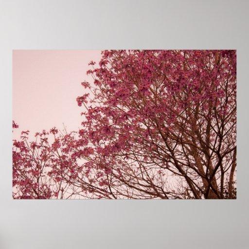 Ramas florales rosadas posters