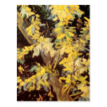 Ramas florecientes del acacia, Vincent van Gogh Postal