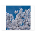 Ramas Minnesota de la nieve de los árboles Postales