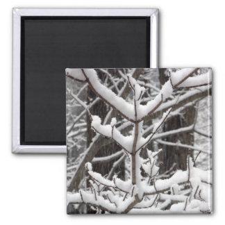 Ramas nevadas imán cuadrado