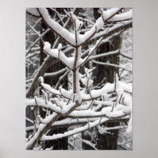 Ramas nevadas póster