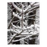 Ramas nevadas tarjeta postal