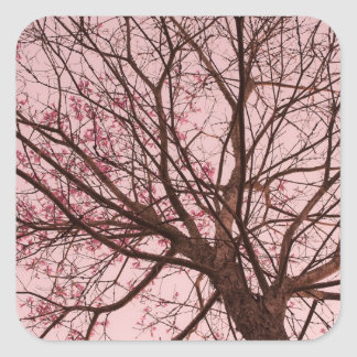 Ramas rosadas del cielo y de árbol etiqueta