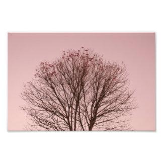Ramas rosadas del cielo y de árbol fotografías