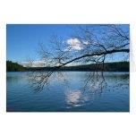 Ramas sobre la tarjeta de la fotografía del lago