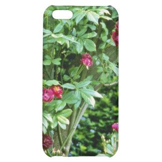 Rambler Rose Adelaide d'Orleans On Pergola iPhone 5C Covers