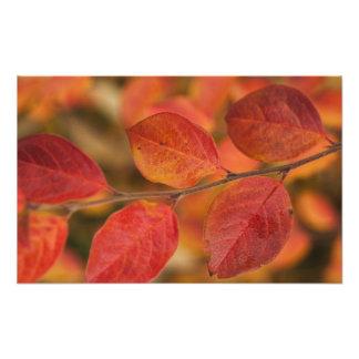 Ramita cubierta con las hojas de otoño impresión fotográfica