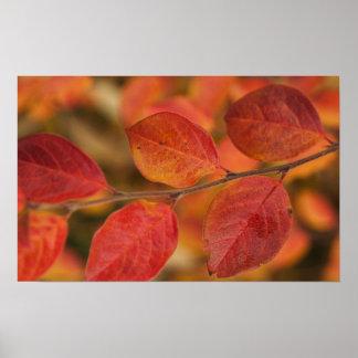 Ramita cubierta con las hojas de otoño posters