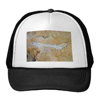 Ramita fósil en piedra caliza gorra