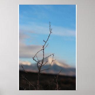 Ramitas contra Mt. Lindsey Póster