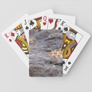 Ramitas y hojas secadas cartas de póquer