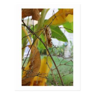 Ramitas y hojas tarjeta postal