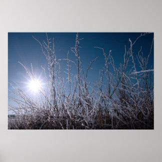 ramitas y ramas heladas en nieve contra amanecer a posters
