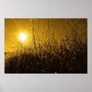 ramitas y ramas heladas en nieve contra el sol ana poster