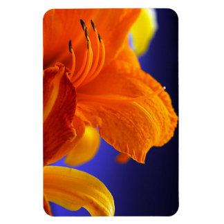 Ramo anaranjado del lirio imán