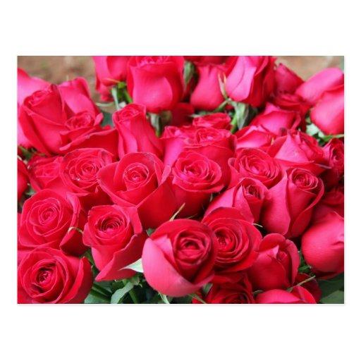 Ramo color de rosa de color rosa oscuro postal