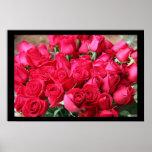 Ramo color de rosa de color rosa oscuro posters