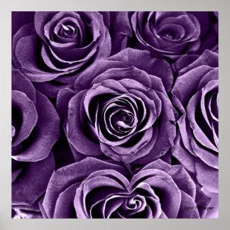Ramo color de rosa en púrpura póster
