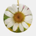 Ramo de la flor - margarita blanca adorno para reyes