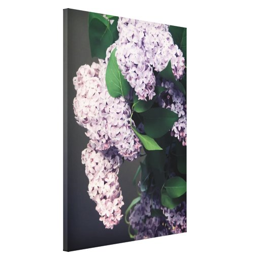 Ramo de la lila con la ilustración lienzo envuelto para galerias