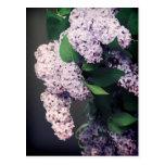 Ramo de la lila con la ilustración postal